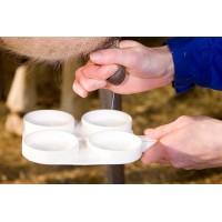 Диагностика мастита у коров